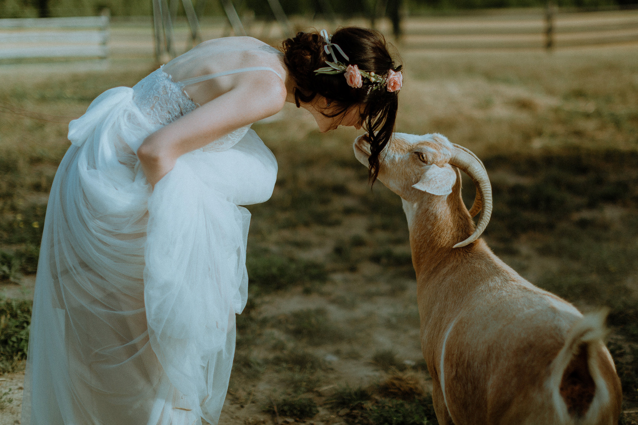 Bride with a Goat at gorgeous outdoor barn wedding