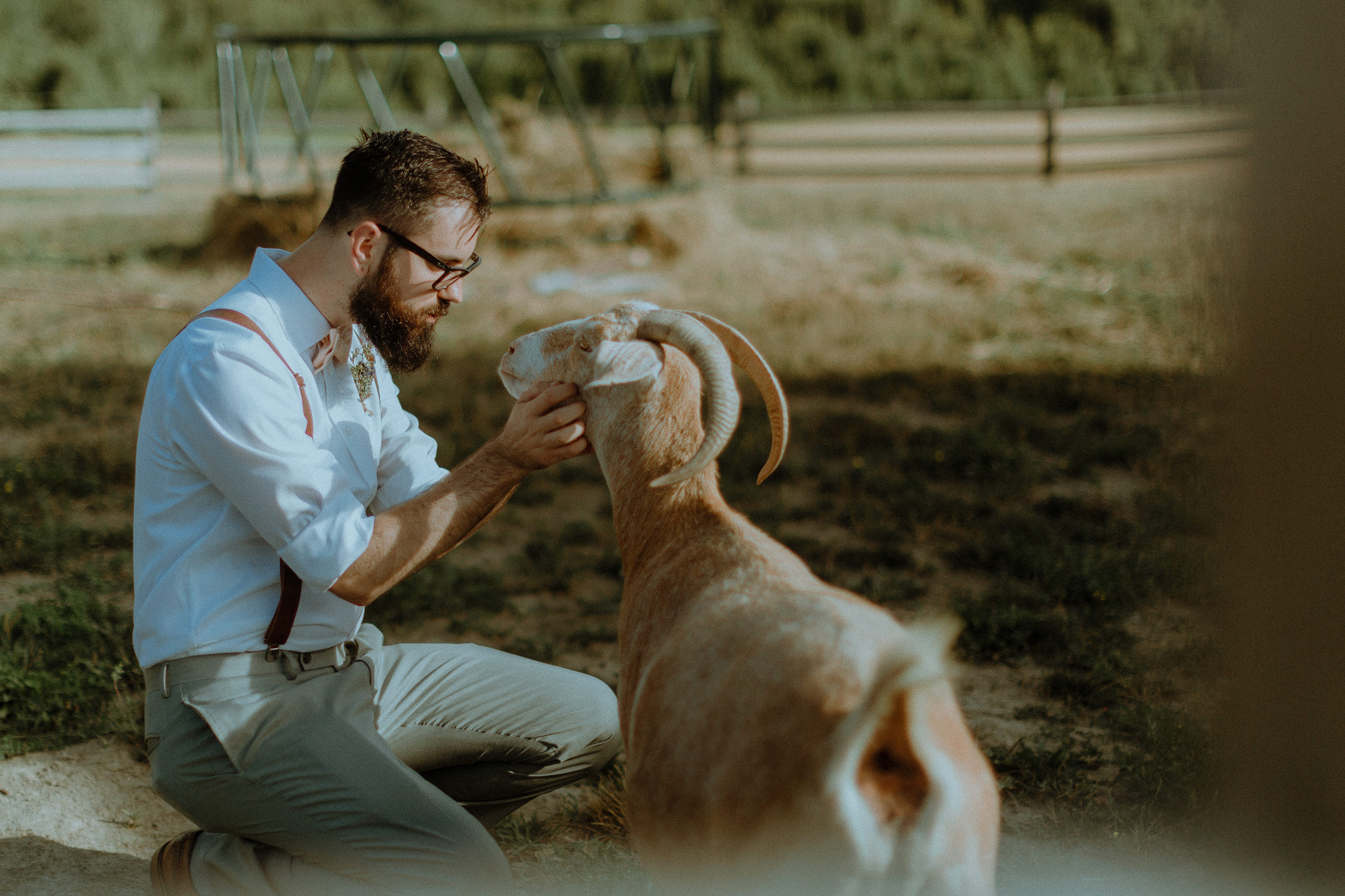 Groom with a goat at gorgeous outdoor barn wedding